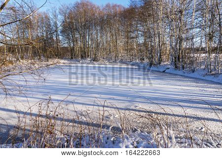 Frozen pond in winter surrounded by trees