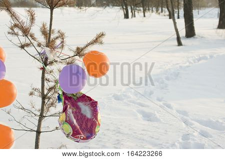 Colorful balloons tethered to a tree in a winter park outdoor shot with focus in the foreground