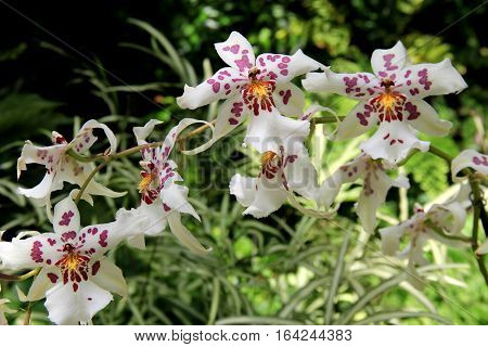 Horizontal image of exotic orchids tucked into green foliage of tropical garden landscape.