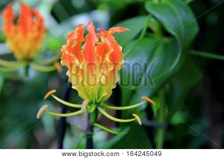 Horizontal image of exotic orchids in tropical garden landscape