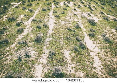 Mountain stunted plants in steppe. Background image