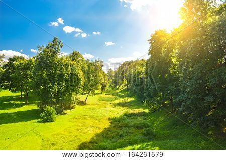 Clearing in forest at sunny weather with beautiful sky