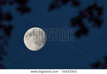 Full moon on the dark night sky seen through branches of a majestic tree