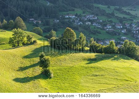 Meadow. Trees shrubs and hilly green grassland in the evening light. Piburger See Taxegg Salzburg Austria Europe