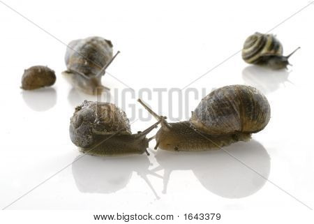 Love By A Snail