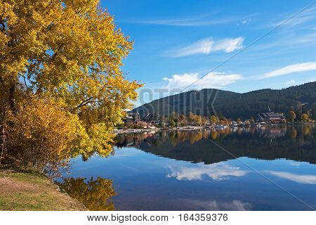 Yellow poplar on the shore of Titisee Lake in the sunny autumn day, Germany