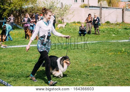 Gomel, Belarus - April 30, 2016: Woman and Shetland Sheepdog Sheltie Collie dog visit International dog show, important event dedicated to dogs and their owners.
