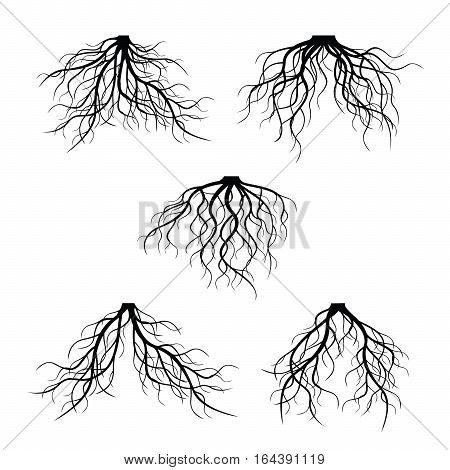 Black Roots. Vector Illustration and graphic element