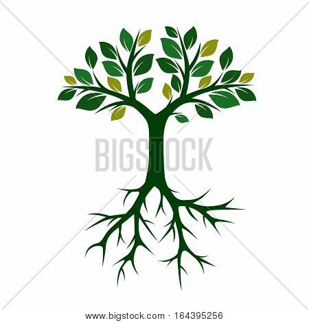 Green Tree and Roots. Vector Illustration and graphic element.