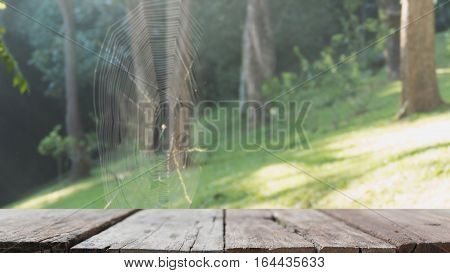 Blur Image Of Spider Sitting On A Spider Webin The Forest With Selected Focus Empty Wood Table For D