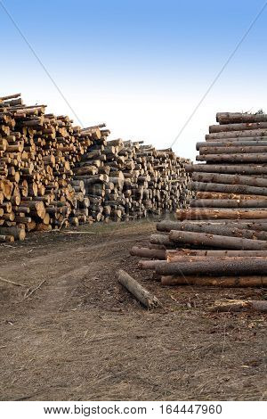 Many stacked sawed pine logs in big piles over clear blue sky vertical view