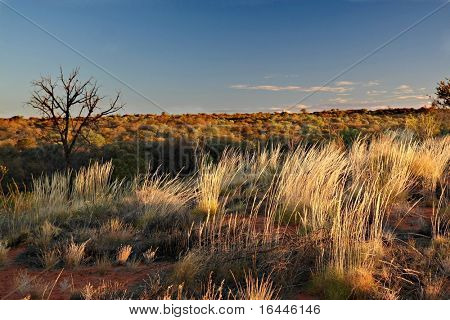 Outback landscape - Kings Canyon, NT Australia