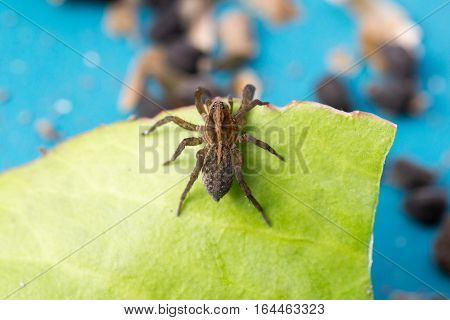 Spider sitting on a green leaf photo for you