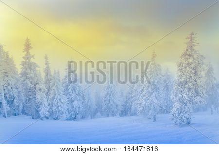 Winter scene in Poiana Brasov beautiful landscape from Transylvania. Romania