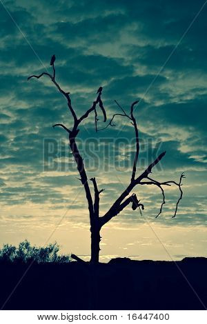Silhouette of tree in Australian outback