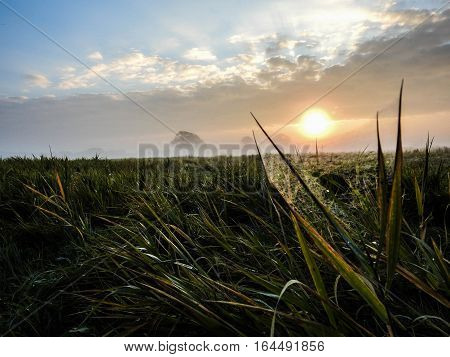 Spider web on a straw of grass on a field in Denmark