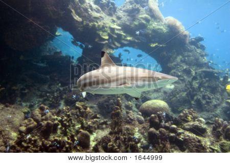 Sharktp