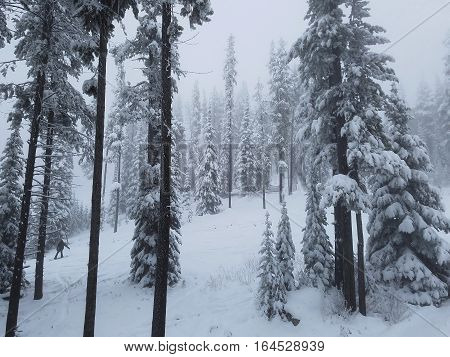 Snowboarder Snowboarding through Snow Covered Canadian Forest