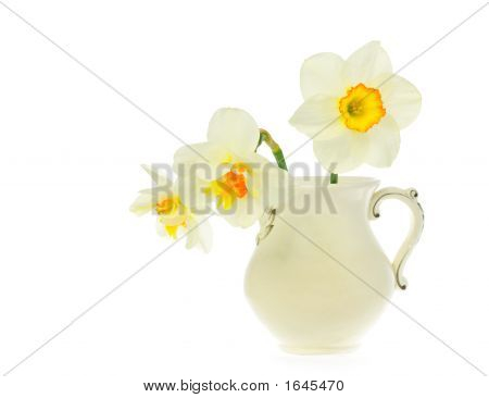 Narcissuses In A White Jug