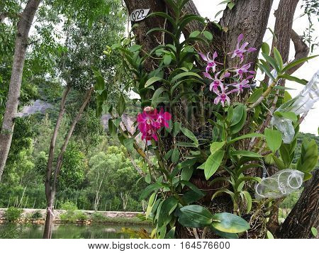 on the bark of a tree grow orchids, different color, purple and pink, lots of greenery, a pond with water