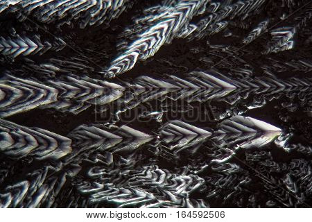 Crystals of Erythritol under the microscope. Erythritol is a sweetener for food.