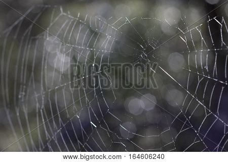 Closeup image of a spider web waiting for a prey.