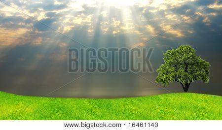 Árbol del roble en el campo