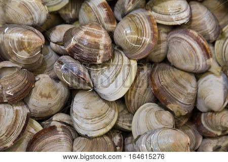Shellfish Such As Clams Are Allergic To Some People
