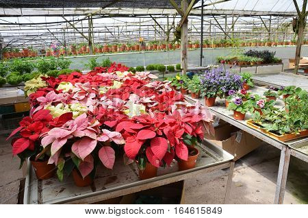 Greenhouse For Variety Of Flowers