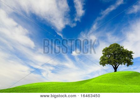 Green tree on blue sky