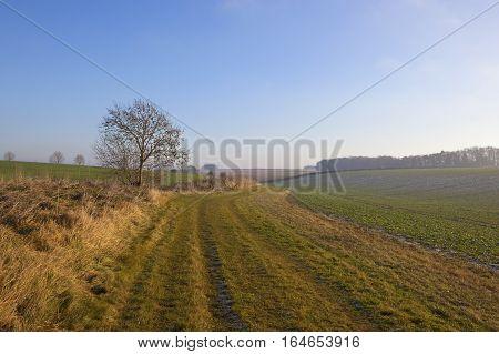 Grassy Bridleway In Winter