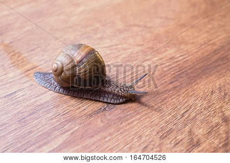 Most major planom.Ulitka snail slides on a wooden surface. Animale. Invertebrates crawling. Shellfish Gastropoda. The symbol of eternity and fertility in Egypt. Shellfish symbolizes patience in Buddhism. Gastropod mollusk with a spiral shell. Retro .Vinta