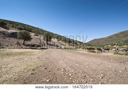 Flock of goats in a rural landscape in Ciudad Real, Spain