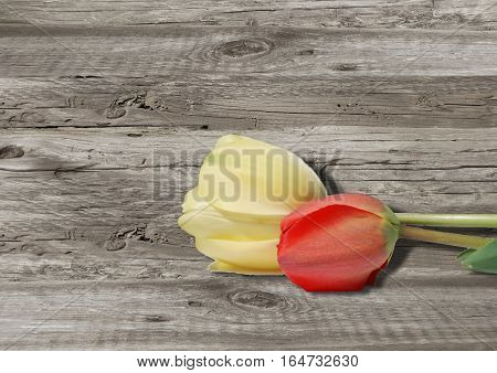 Tulips On Old Grey Wooden Boarderes