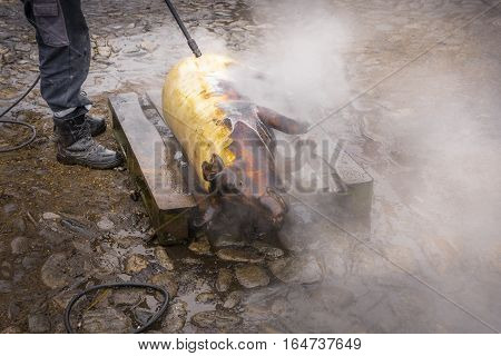 Traditional pig sacrifice custom in Romania. People washing the pig with strong jet of water during the traditional pig slaughter before Christmas.