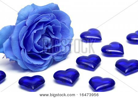 blue rose with hearts over white background