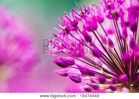 abstract violet flowers on field