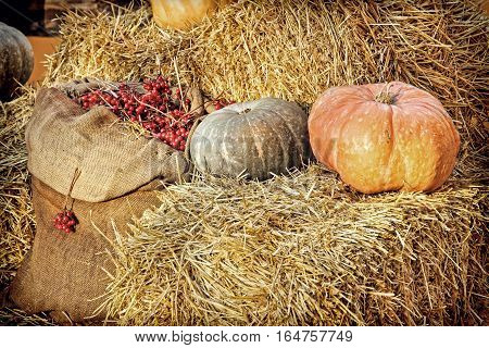 Thanksgiving Display of Pumpkin on hay bale and burlap sack with red berries.Retro style toned image.
