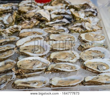 Fresh Shucked Oysters on the Half Shell on ice in a seafood market