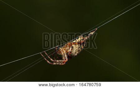 Spider Side View