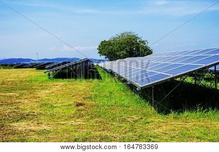 Solar panels on the lawn in the power station.