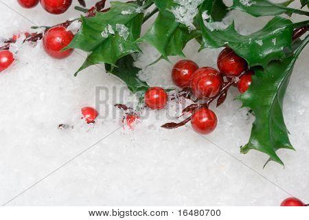 Europäische Stechpalme in weißen Schnee
