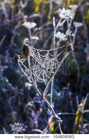 Field of grass and spiderweb covered with frost. The first September frosts in Siberia