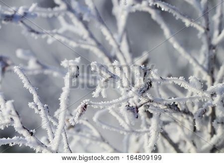 winter scenery with snow covered trees and branches