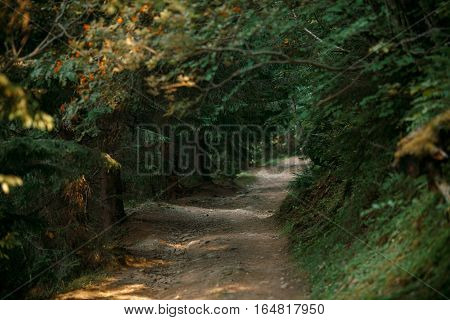 Small footpath in mountain's forest in the evening