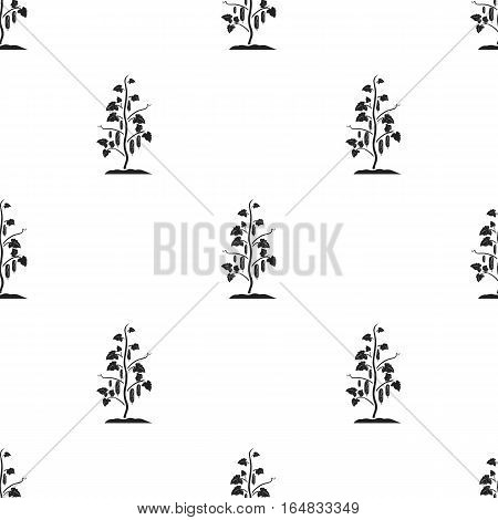 Cucumber icon in black style isolated on white background. Plant pattern vector illustration.
