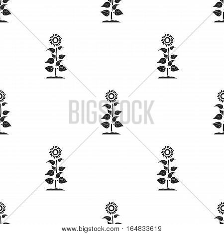 Sunflower icon in black style isolated on white background. Plant pattern vector illustration.
