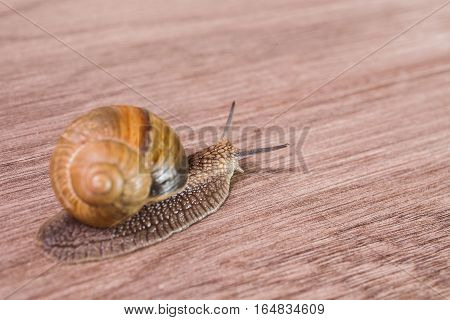 snail on a wooden background with clam shell. speed of the network connection
