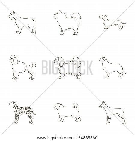 Dog breeds set icons in outline style. Big collection of dog breeds vector symbol stock