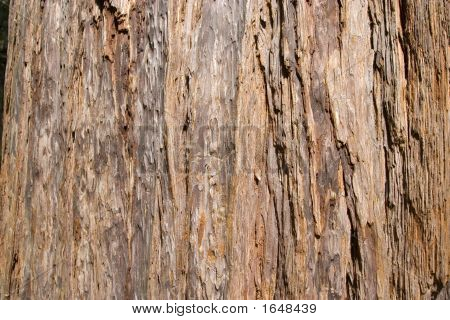 Red Wood Tree Texture